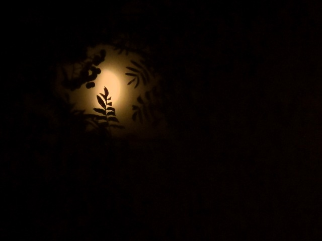 moon-leaves-silhouette-img_4692