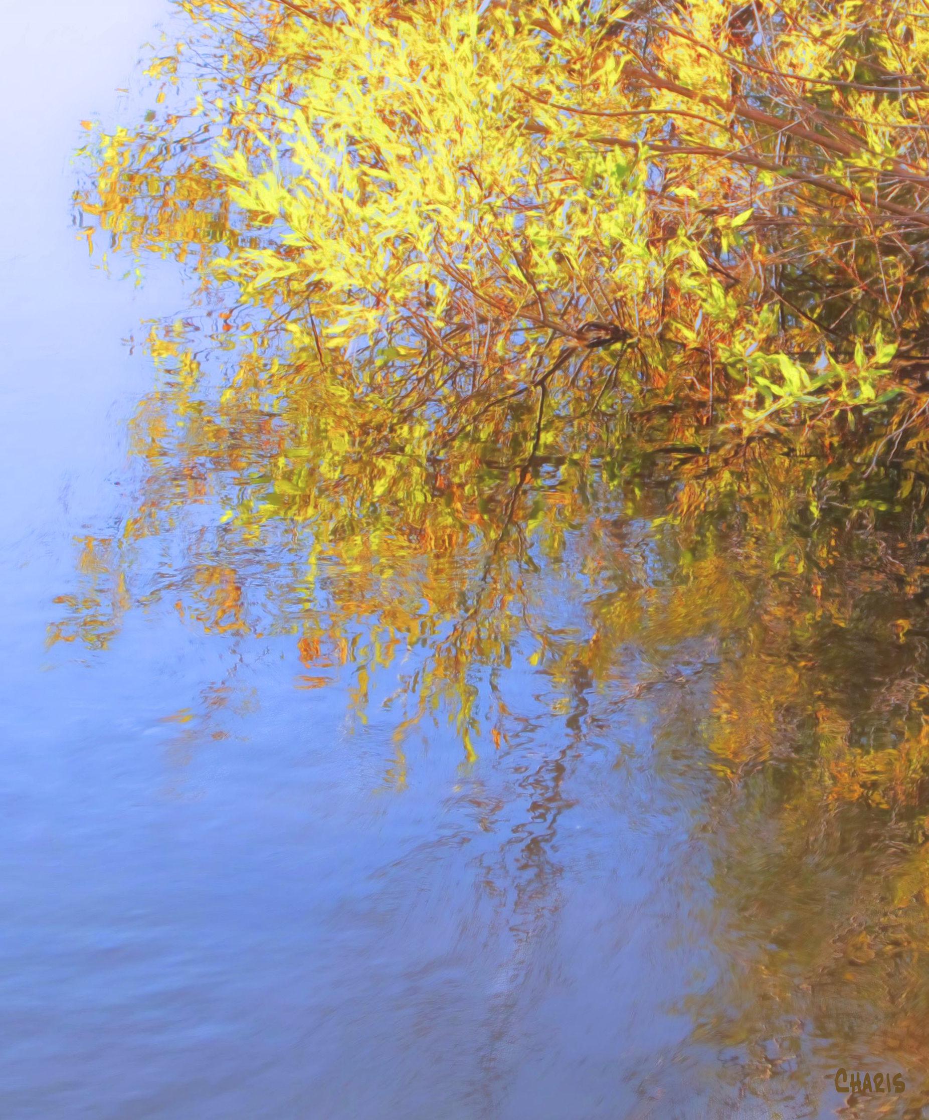 yellow-bush-water-colour-ch