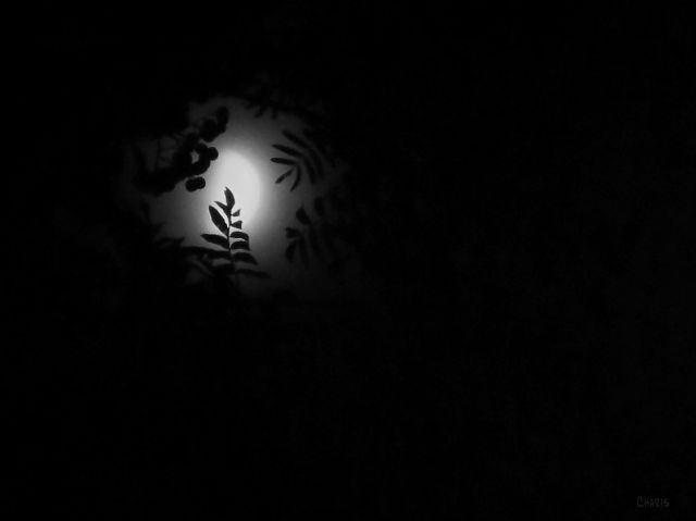 leaves-moon-bw-img_4692