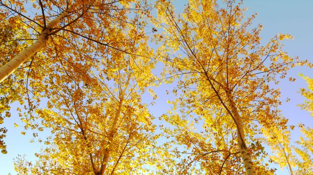 umatilla-trees-yellow-sky-img_4821