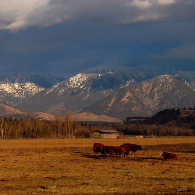 missions-cows-mountains-contrast-st-ch-dsc_0338