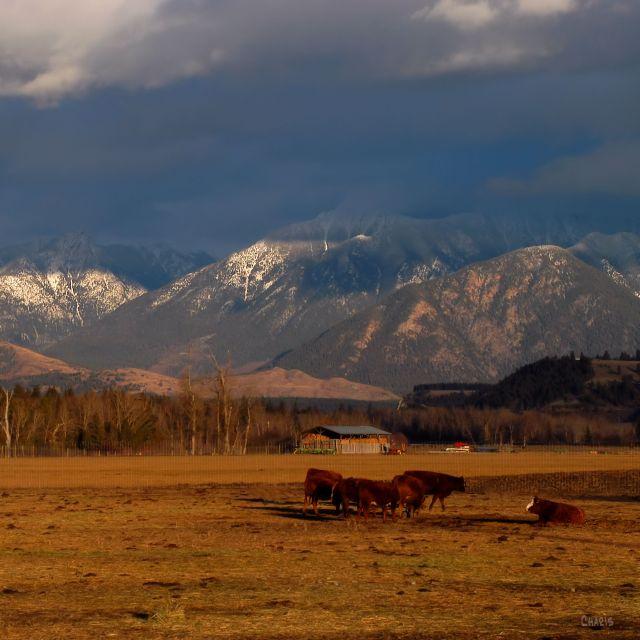 missions-cows-mountains-contrast-st-ch-dsc_0338