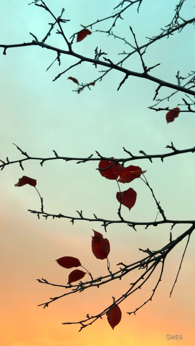 plum-tree-leaves-sunrise-rs-ch-img_4328