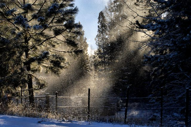 snow-sun-ray-forest-fence-ch-rs-dsc_0377