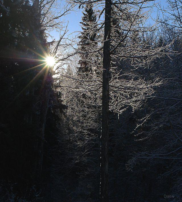 sun-ray-frost-tree-winter-snow-ch-dsc_0386