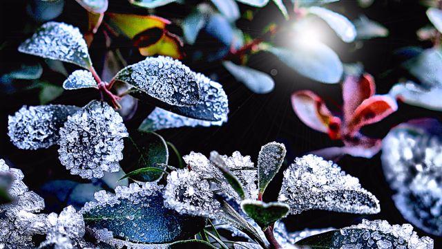 ice crystals on periwinkle rs ch sunburst IMG_5829.jpg