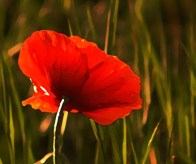 single-poppy-rearview-backlit-db