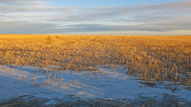 stubble-field-ch-rs-img_6450