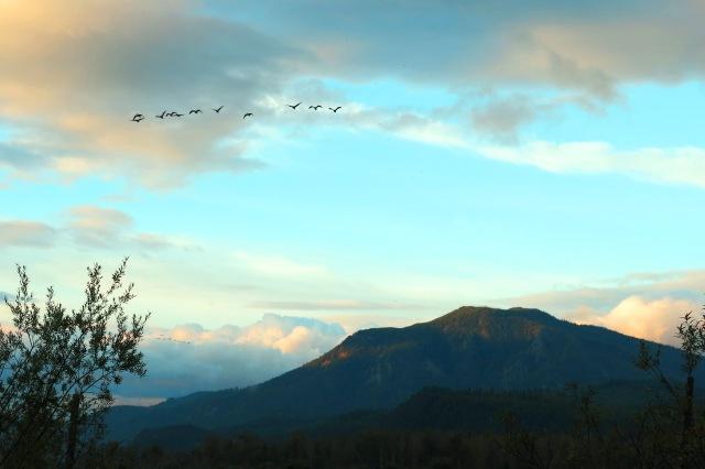 geese mountain sky IMG_2415