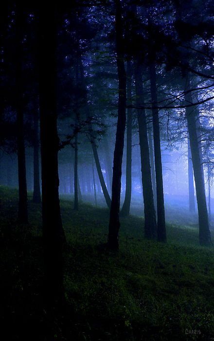 forest fog cool blue