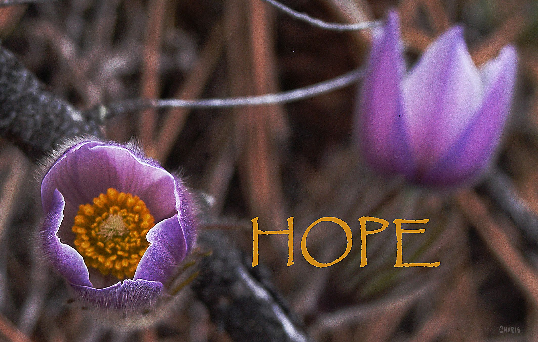 hope 3 forerunners ch DSC_0052