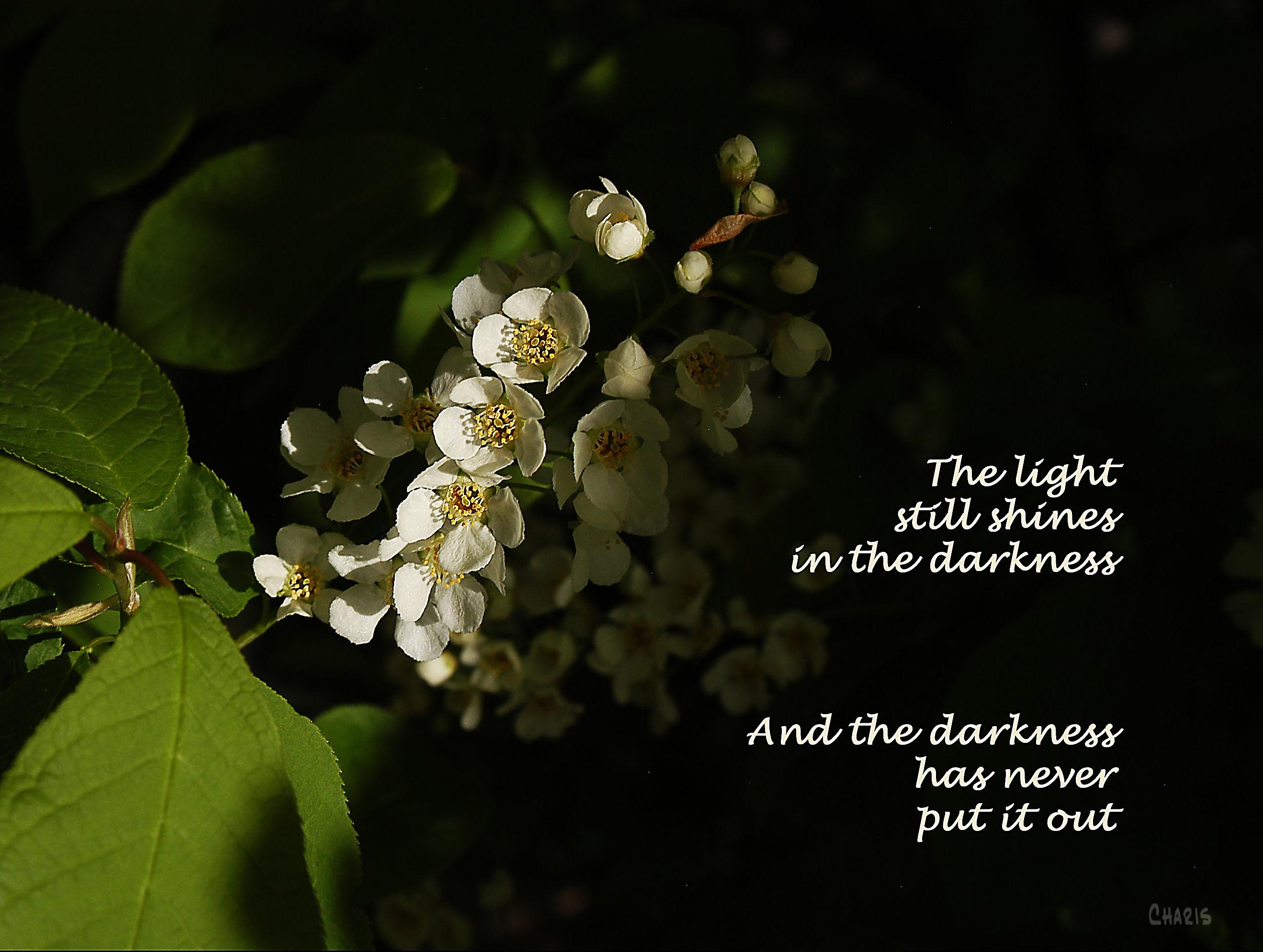 light still shines ch DSC_0003 2