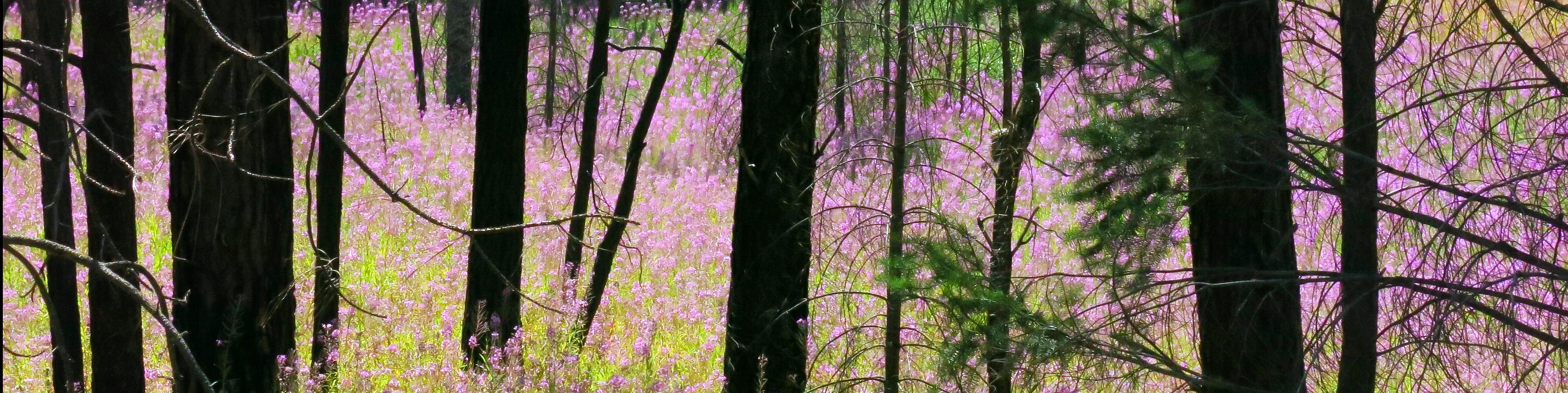 fireweed banner IMG_8555