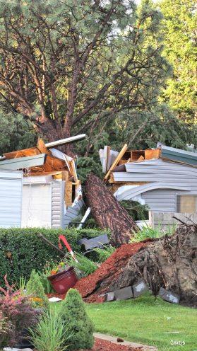 tree crash IMG_8683
