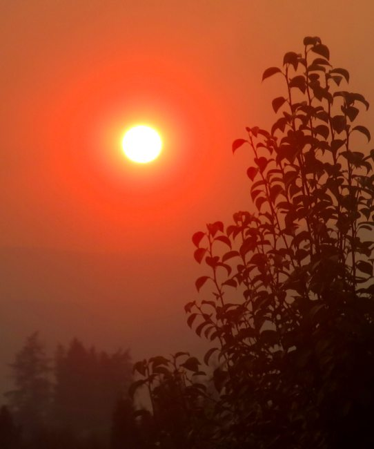 fire sun orange IMG_8940