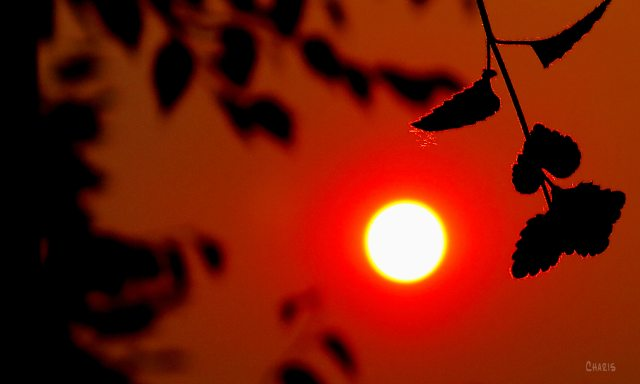 Perception sun red fire season ch IMG_8931