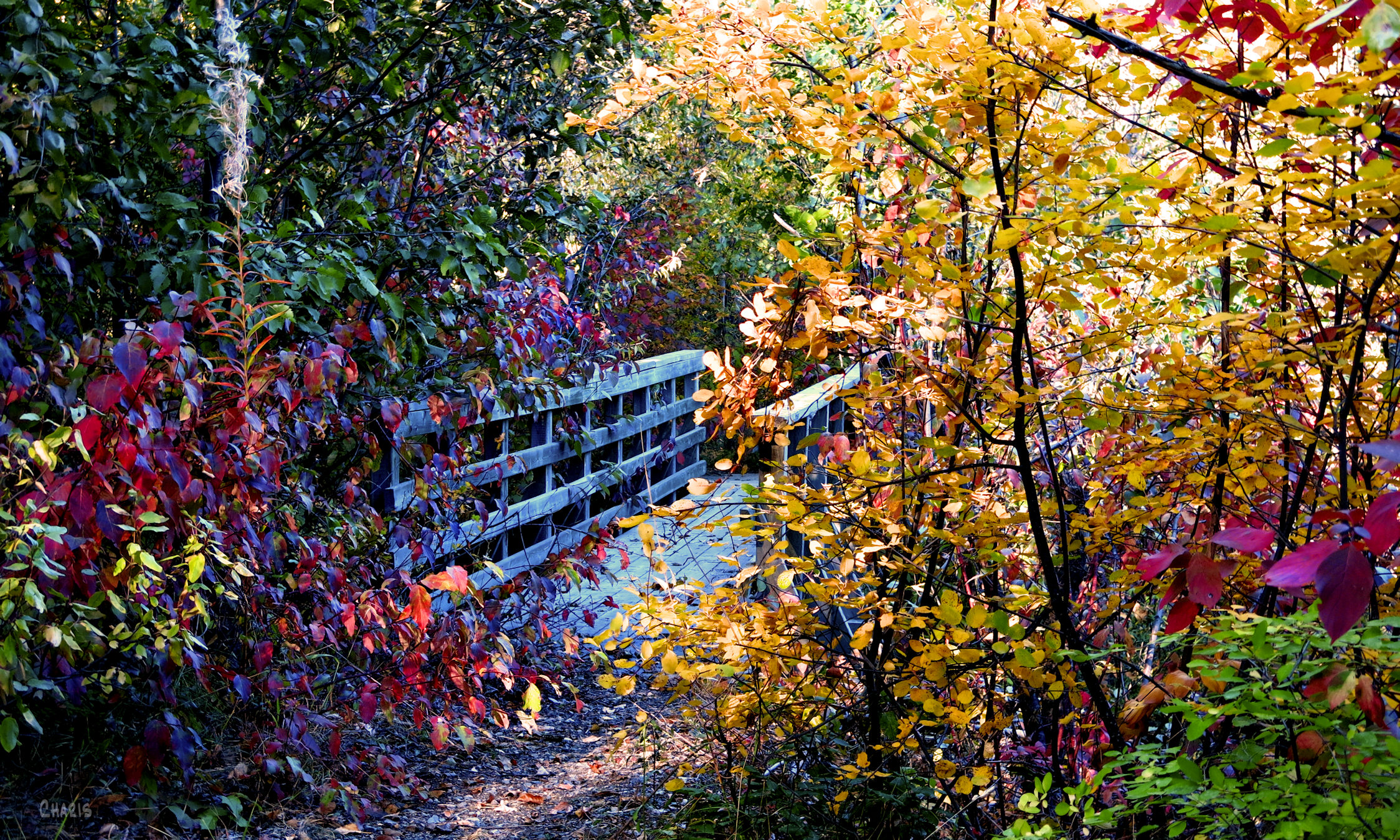 bridge at mineral lake autumn colour ch rs IMG_0522