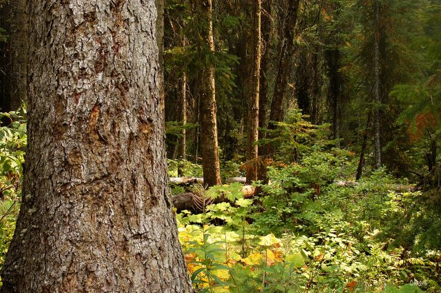 forest green 3 DSC_0137