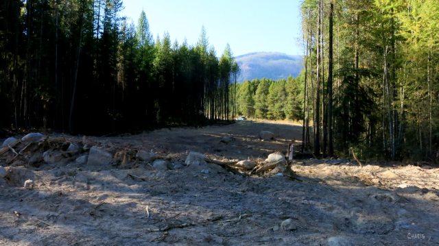 forest service fire break IMG_0501