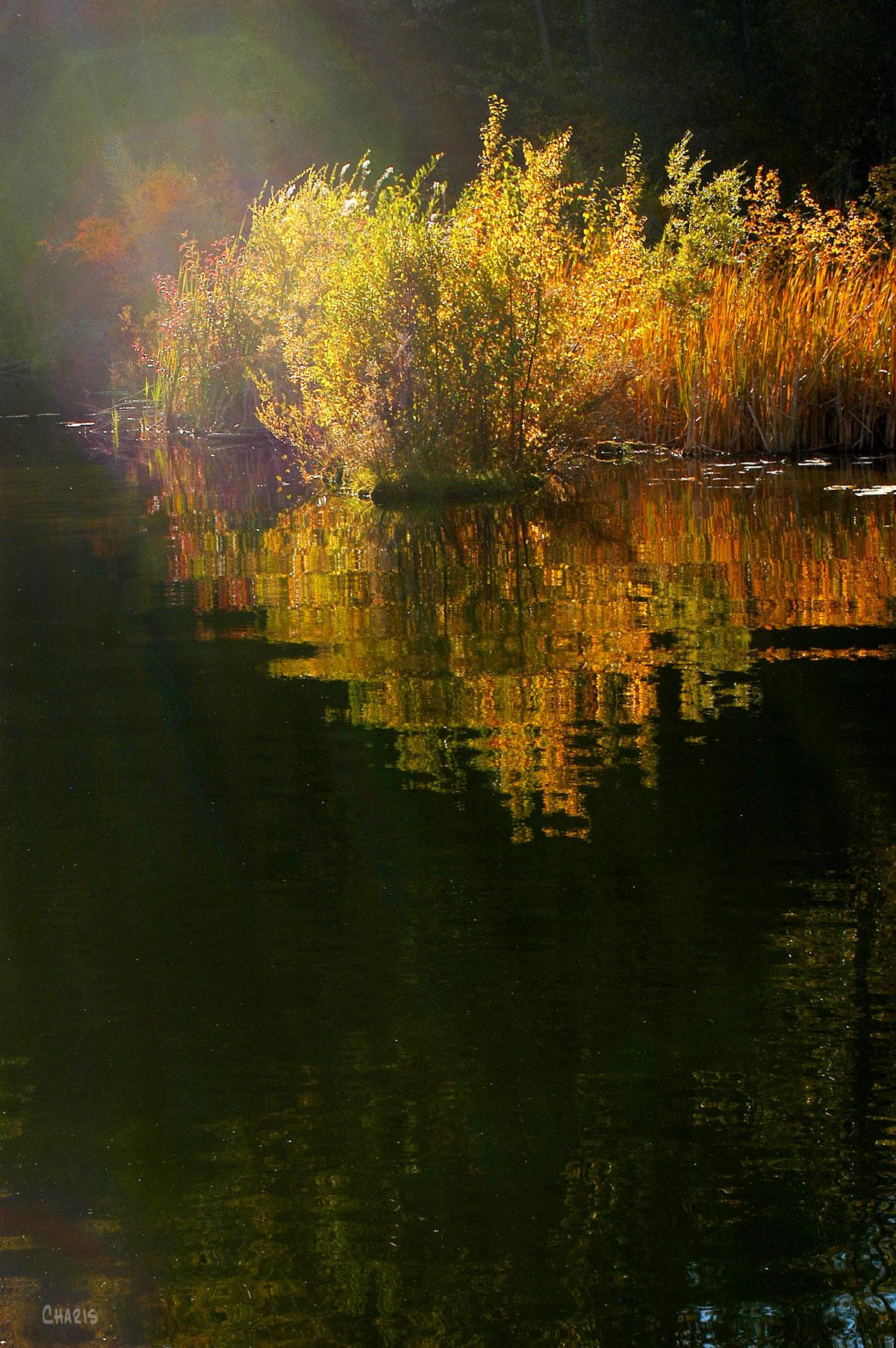 mineral lake reeds DSC_0162 (2)
