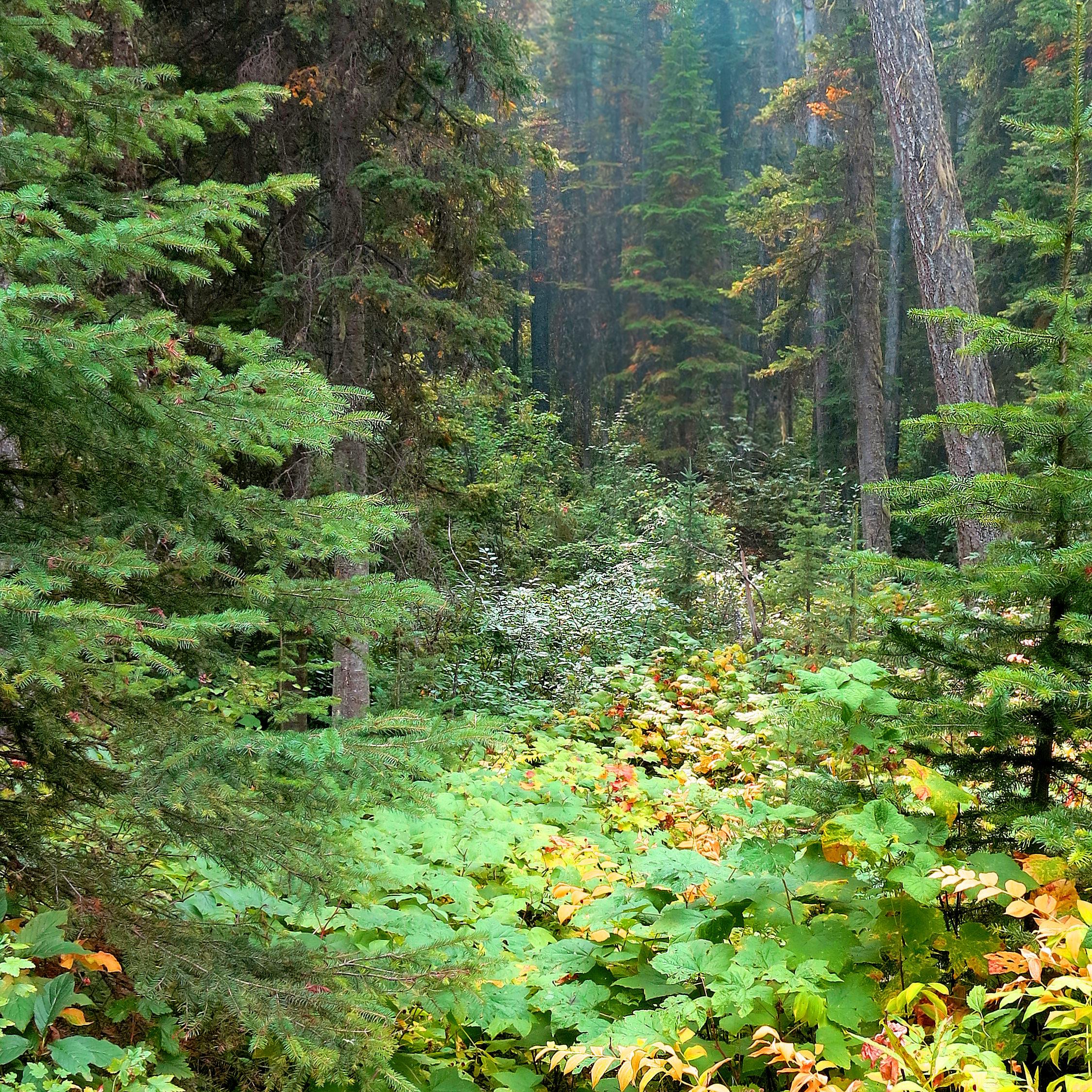 wwods forest glades IMG_0136.jpg
