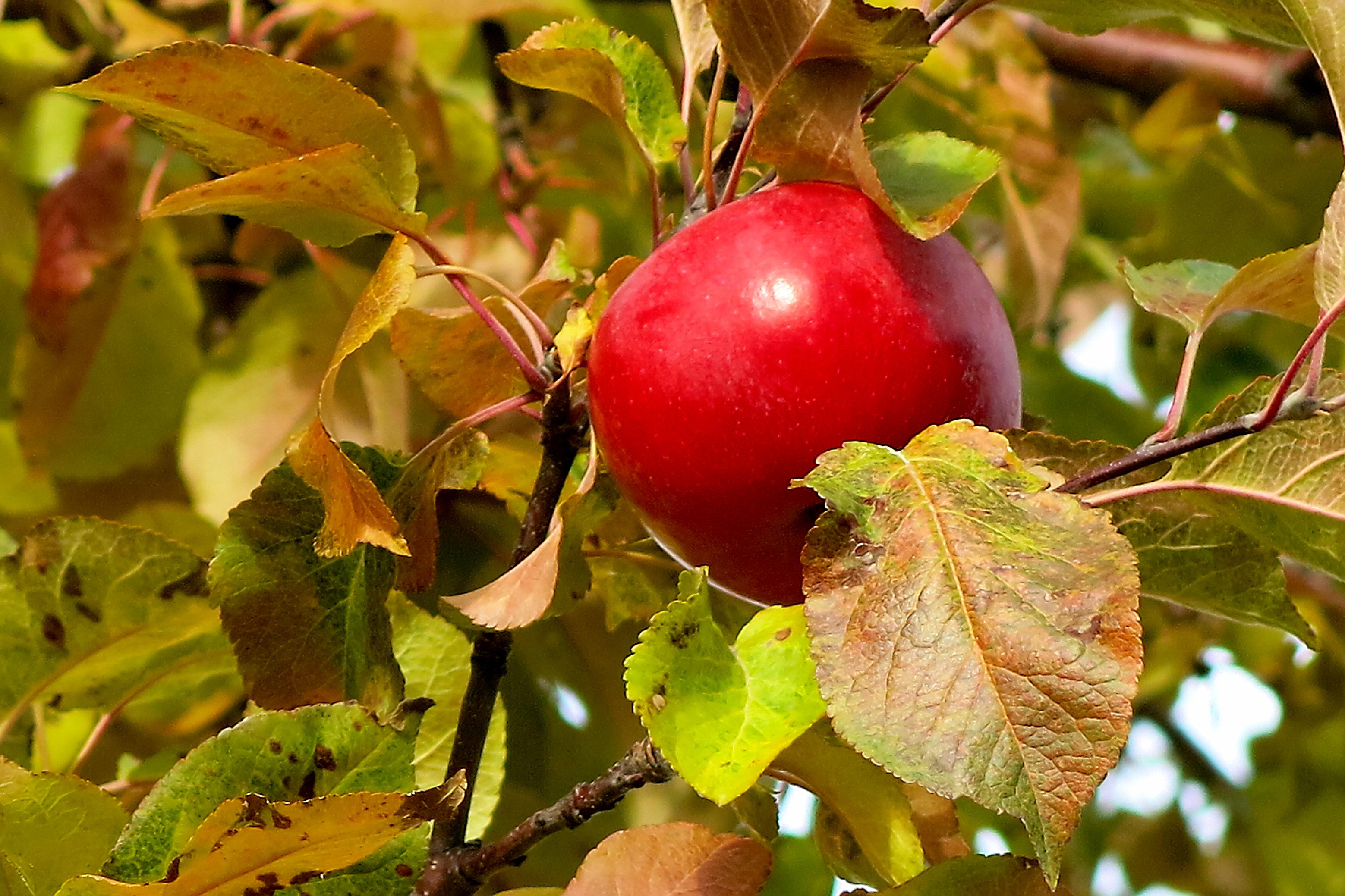 around the block 8 apple IMG_1549.jpg