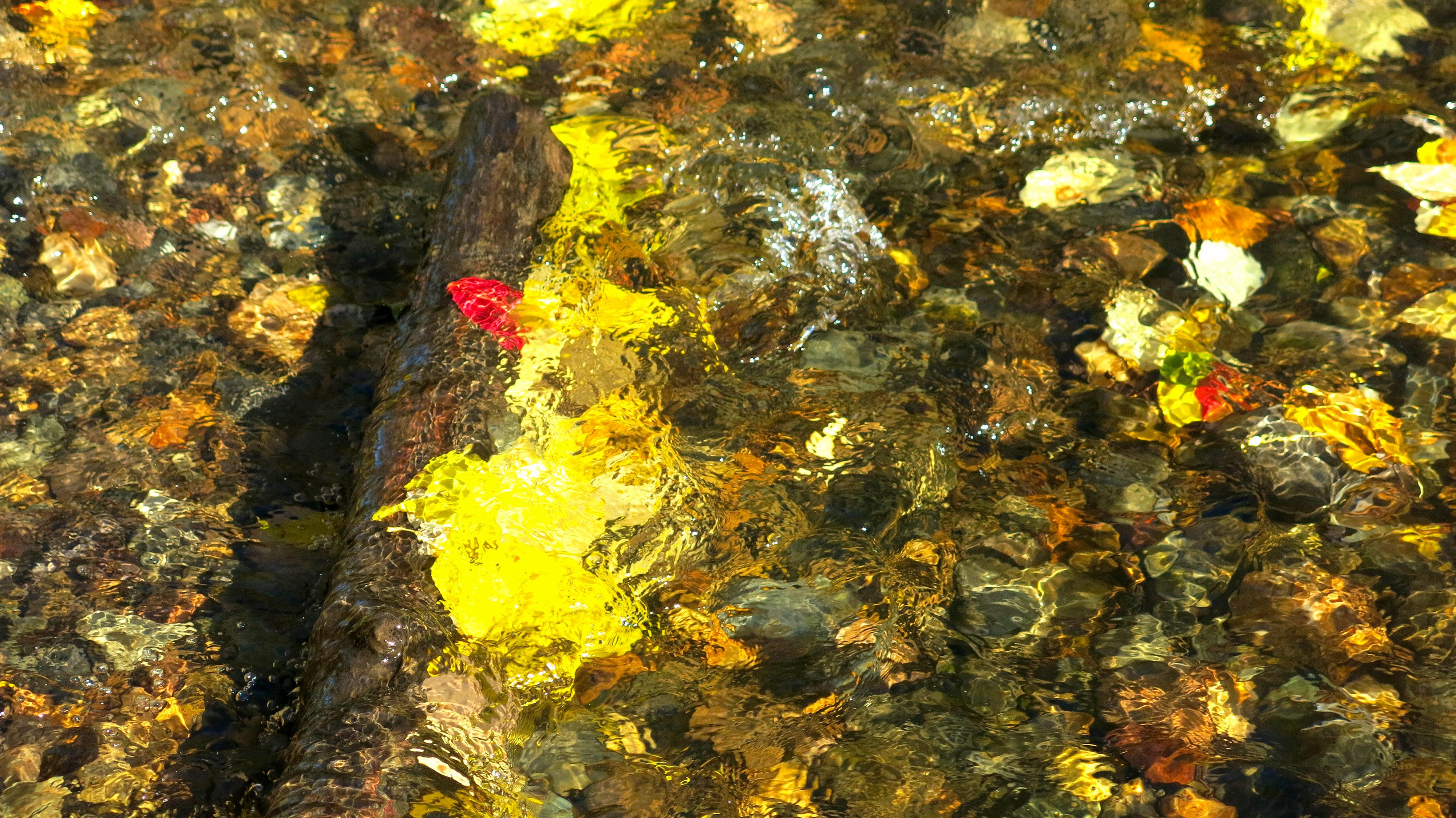 autumn creek colour stones bright IMG_1656