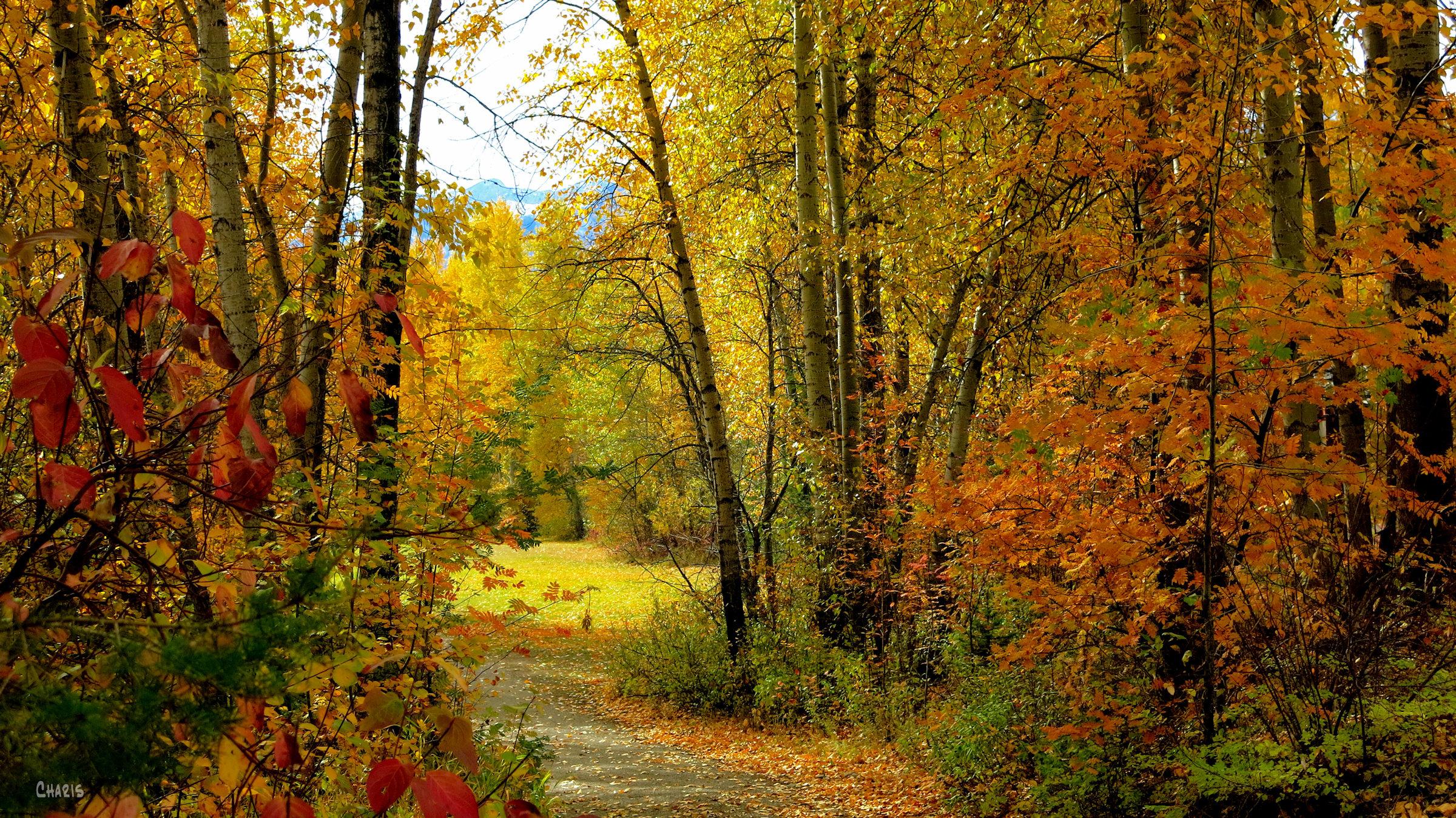 autumn fernie park wide ch rs IMG_1314