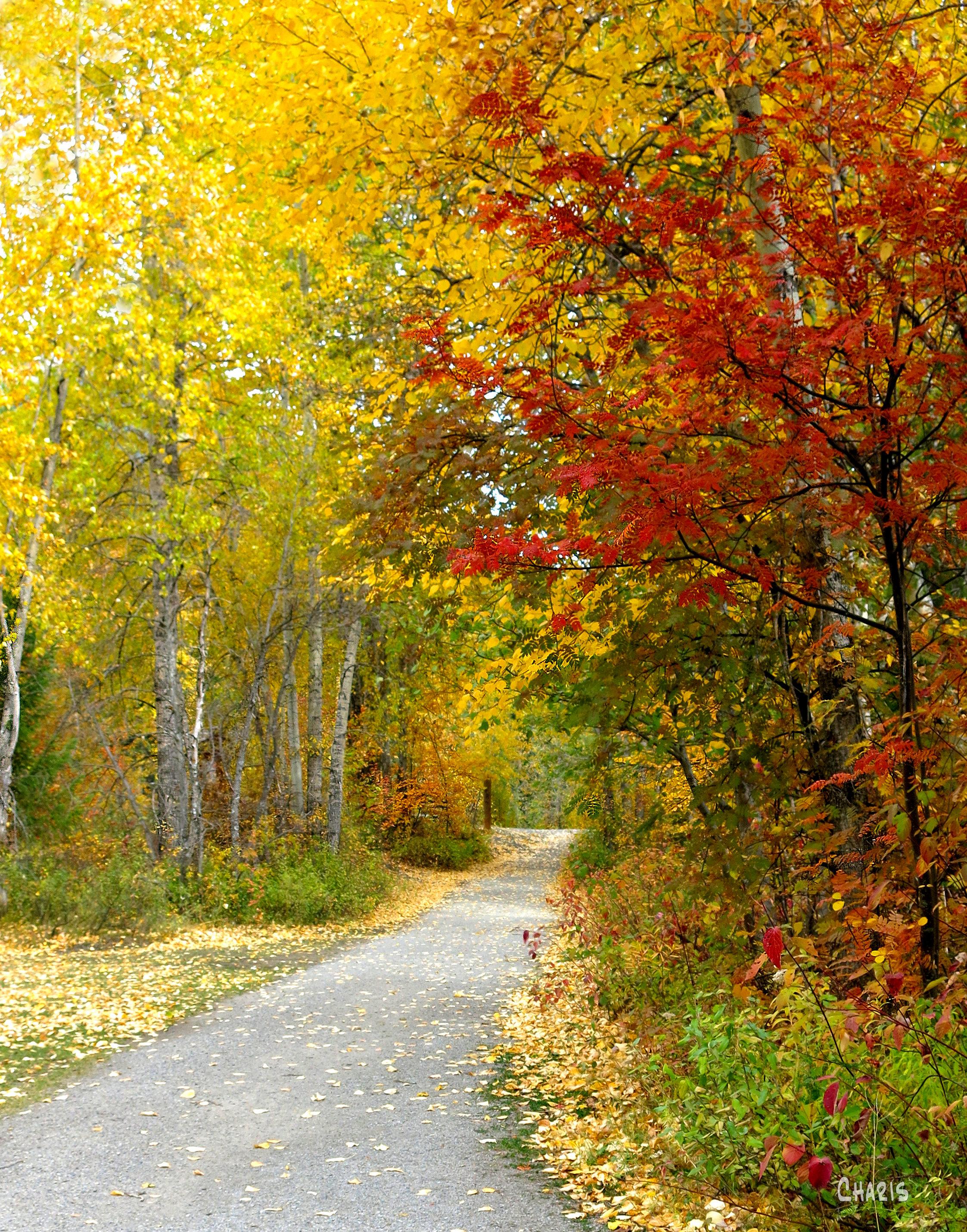 autumn fernie path rs ch crop IMG_1282