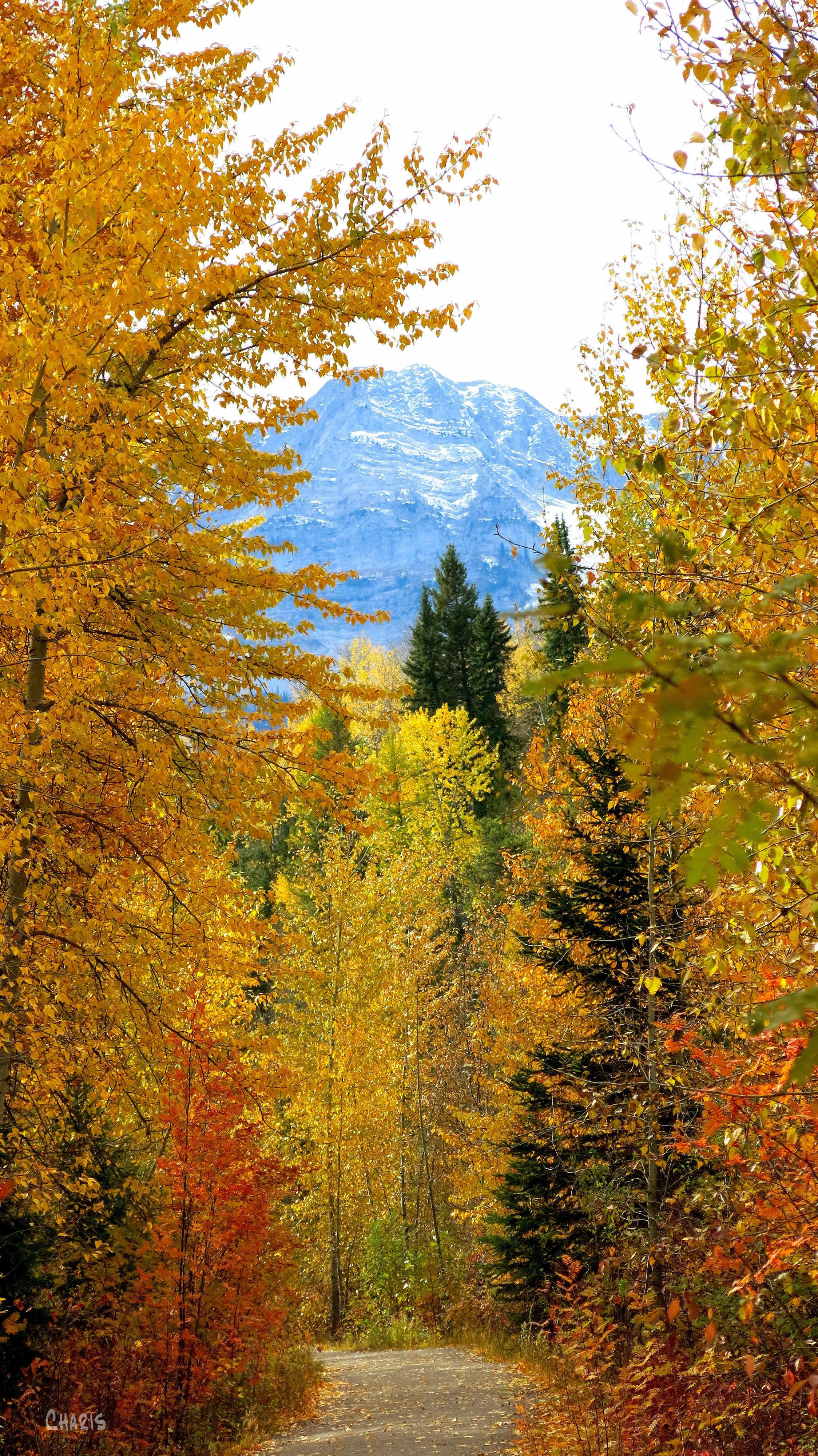 autumn fernie path trail mountain ch rs colour gold IMG_1322