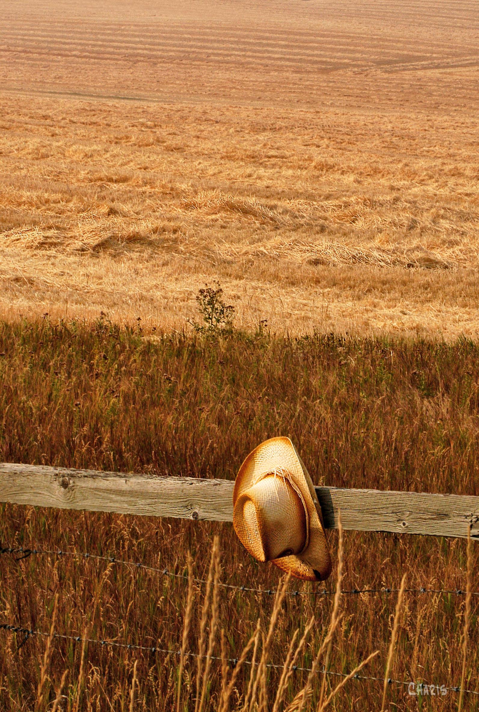 cowby hat fence field 2 ch DSC_0158