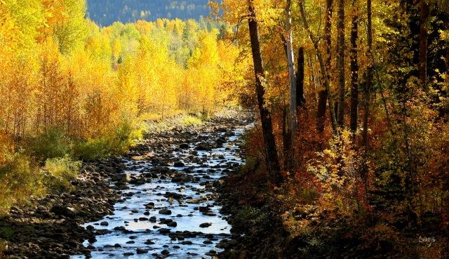 Fernie creek autumn ch rs IMG_0940