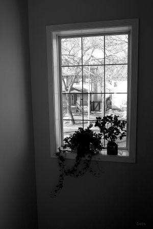 IMG_2011 window bw ch