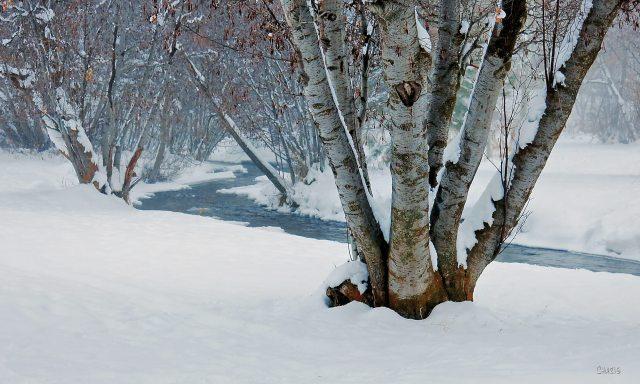 joseph creek winter fog treech rs IMG_2583