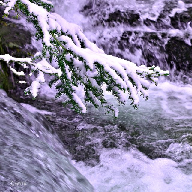 snow branch creek outflow crop ch DSC_0843