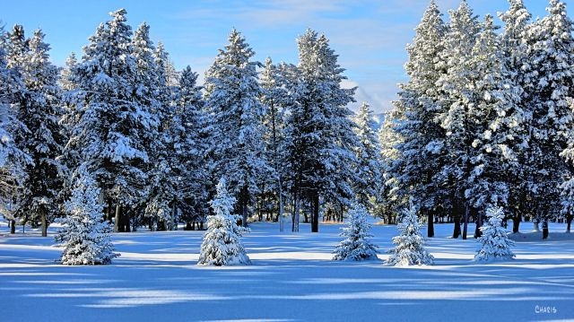 snow evergreen trees generations ch rs  IMG_2828.jpg