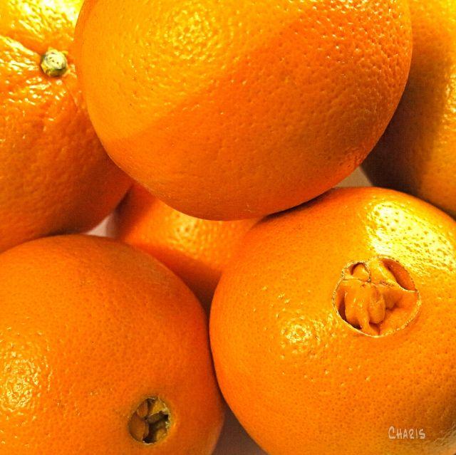 navel oranges IMG_2923