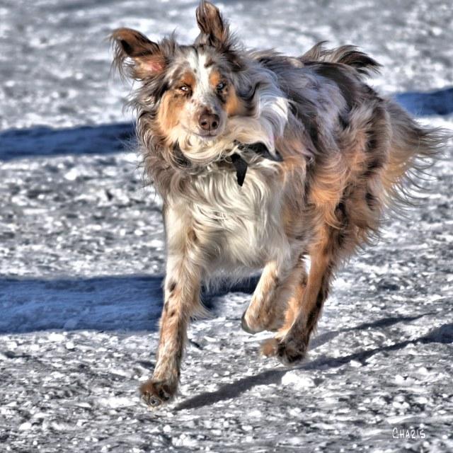 dog sq off leash park ch DSC_0062