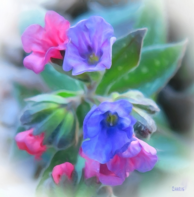 pink blue flowers