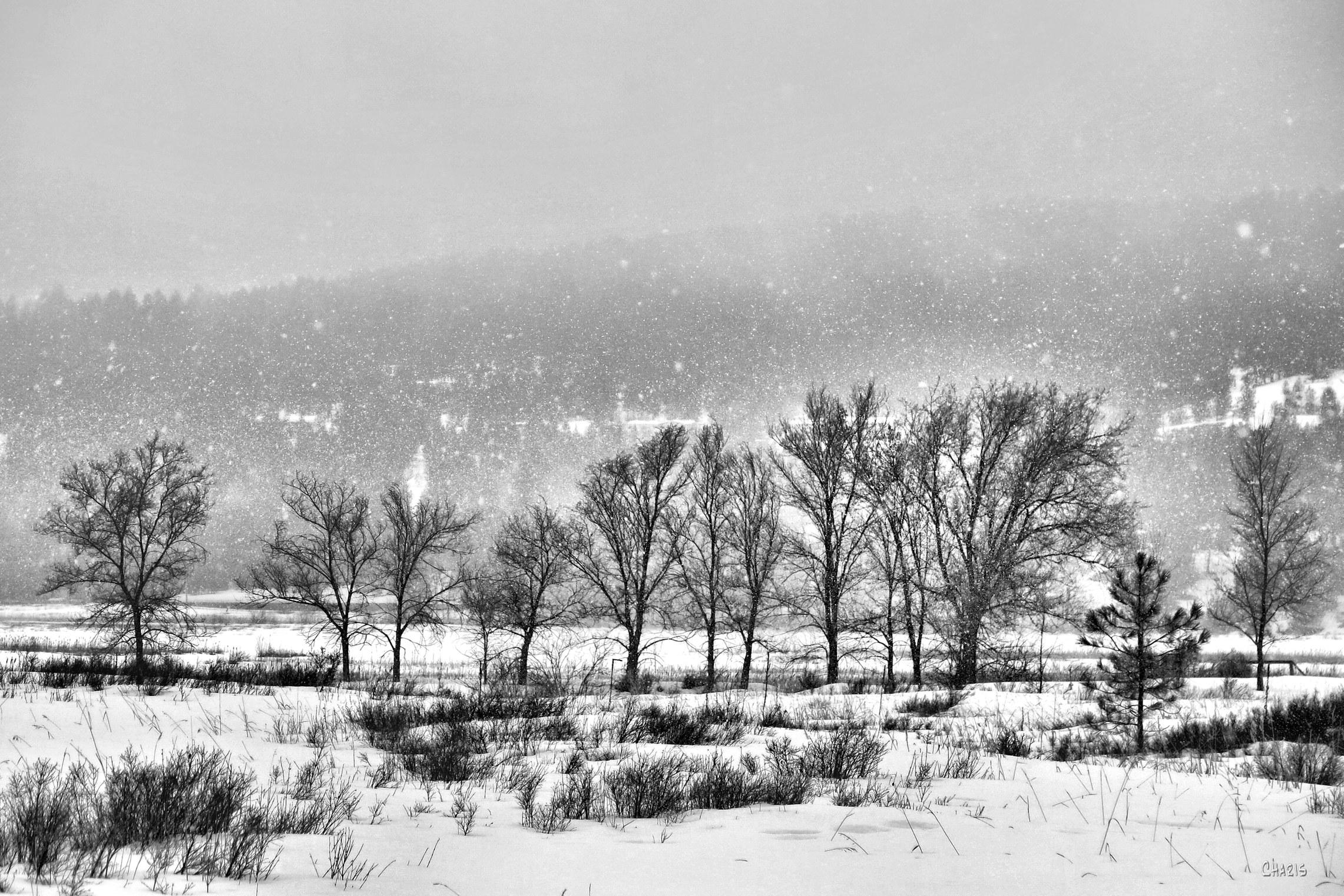 Elizabeth lake winter trees snow bw ch rs IMG_3188