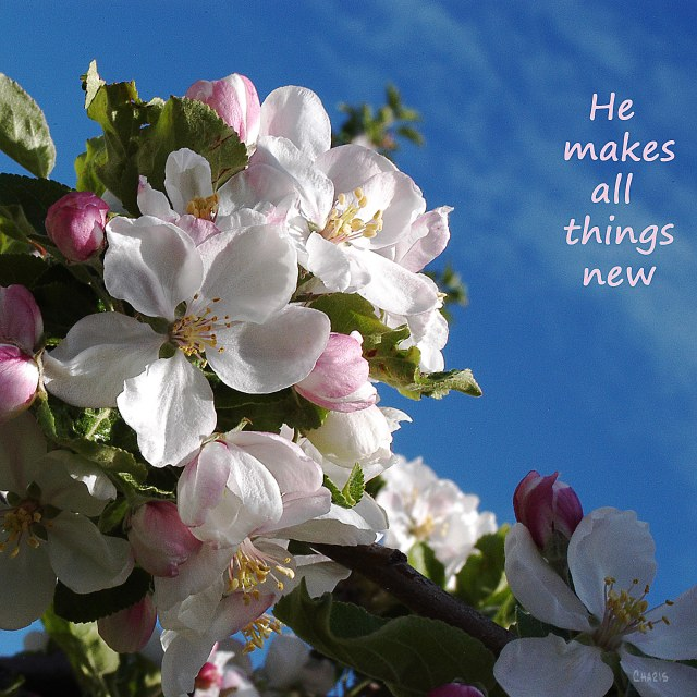 he makes all things new poster ch sq