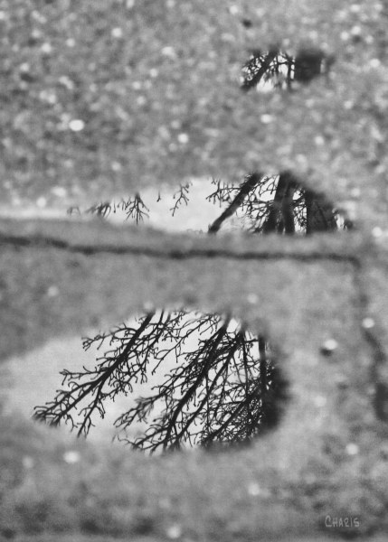 puddle tree reflect ch bw IMG_3906