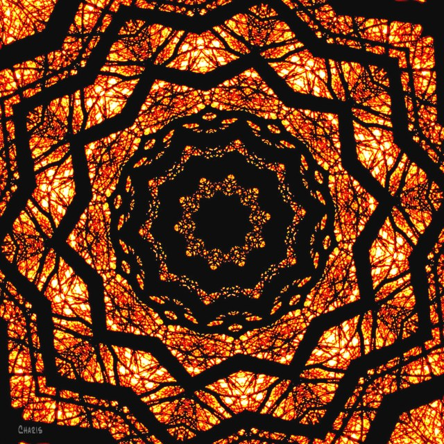 sunset trees kaleidoscope ch IMG_2992
