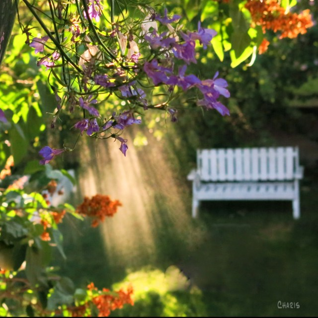 garden spray light sq ch 2 IMG_4589_edited-2