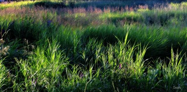 field grass pastel crop DSC_0047_edited-1