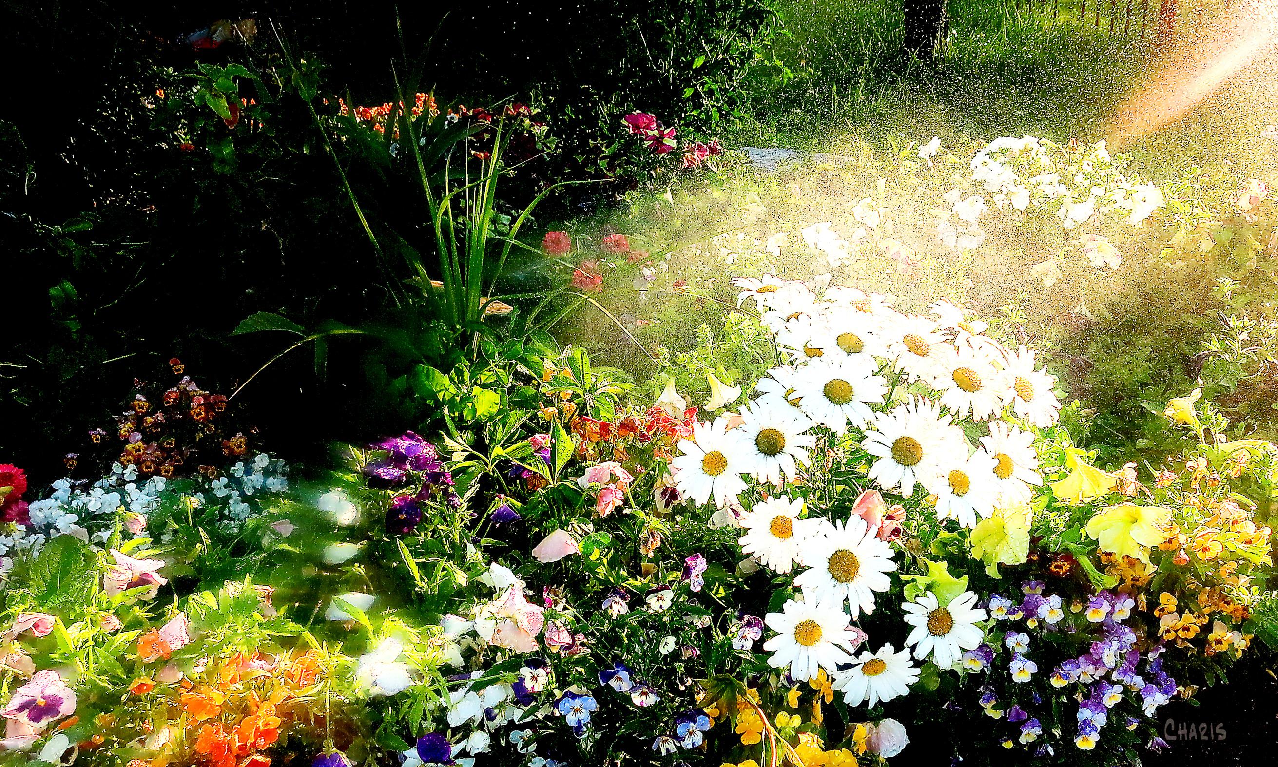 garden spray ch rs IMG_4895