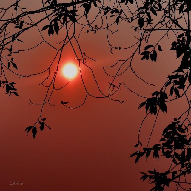 sun fire season DSC_0130