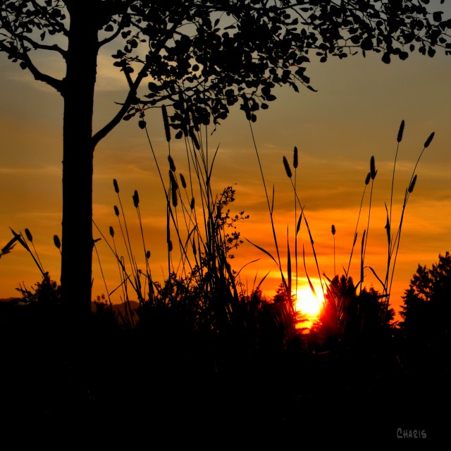 sunset grass tree silhouette ch crop DSC_0194