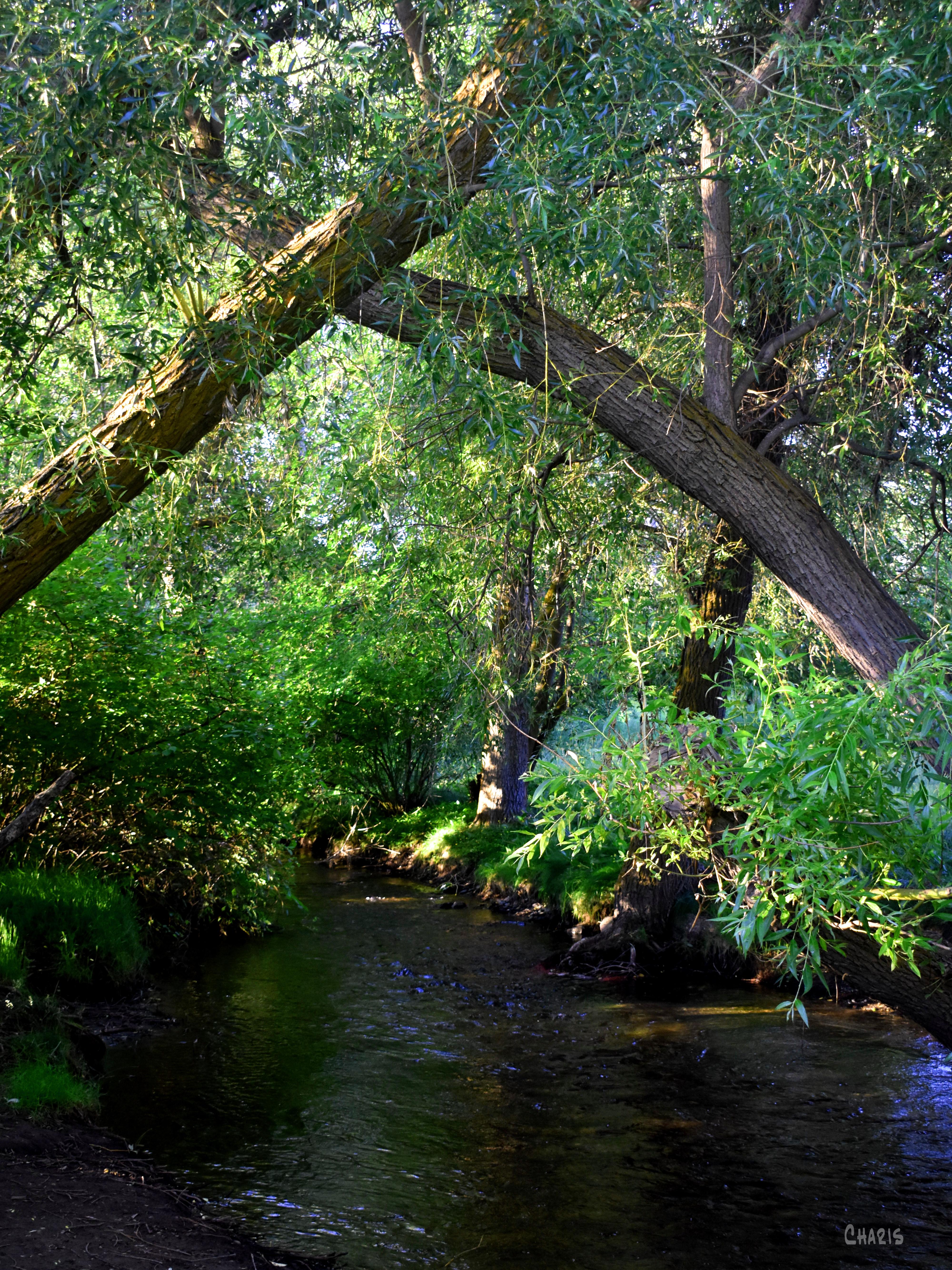 creek rest ch DSC_0059