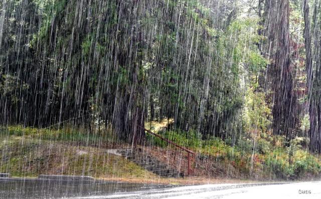 rain forest ch rs DSC_0278